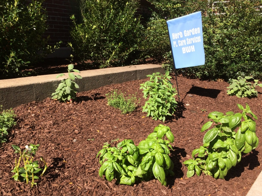 The herb garden on Shattuck Street